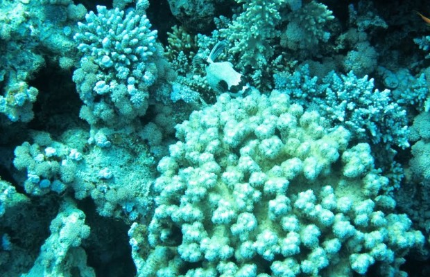 Wonderschone onderwater wereld van Dahab