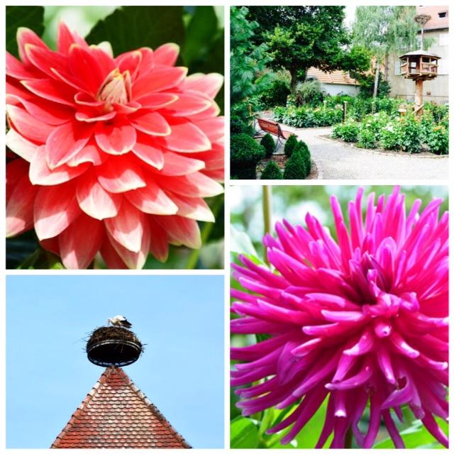 Nummer 15 Jardin du Dahlia