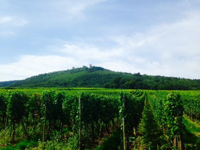 De wijngaarden van Equisheim