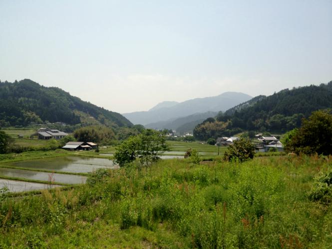 Fields_Japan