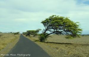hawaii big4