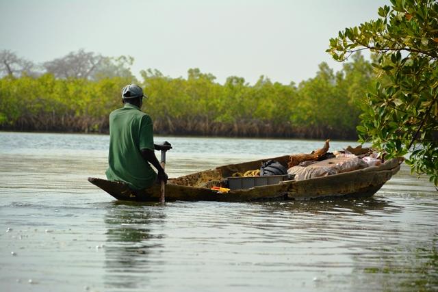 Boek een boottocht op The Gambia rivier