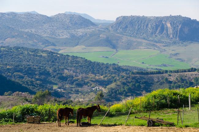 Camino de los Molinos, Ronda, Spanje