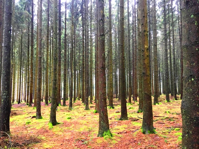 De bossen waar het Ardennenoffensief ruim 70 jaar geleden heeft plaatsgevonden. Het laatste grote offensief van Duitse Wehrmacht