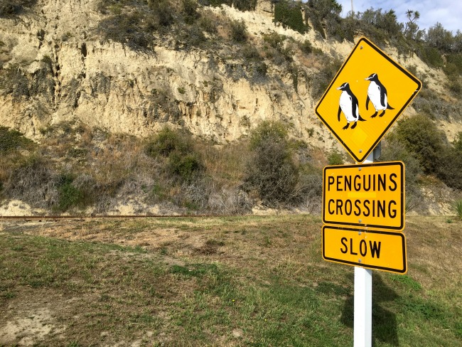 46 Pinguins New Zealand
