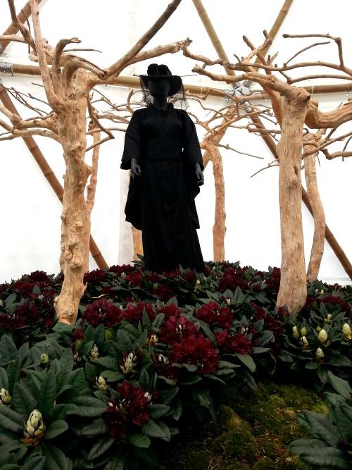 Black Widow, zwart bij de start van de bloei en donker bordeaux bij het ver-bloeien