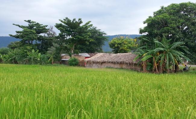 Rijstvelden Mto wa Mbu