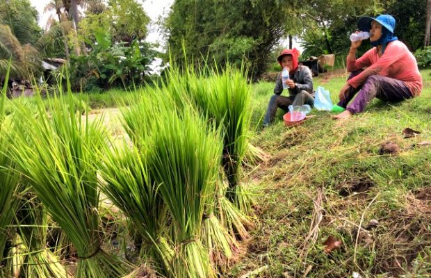 Triple A Adventures Cambodia ricefields