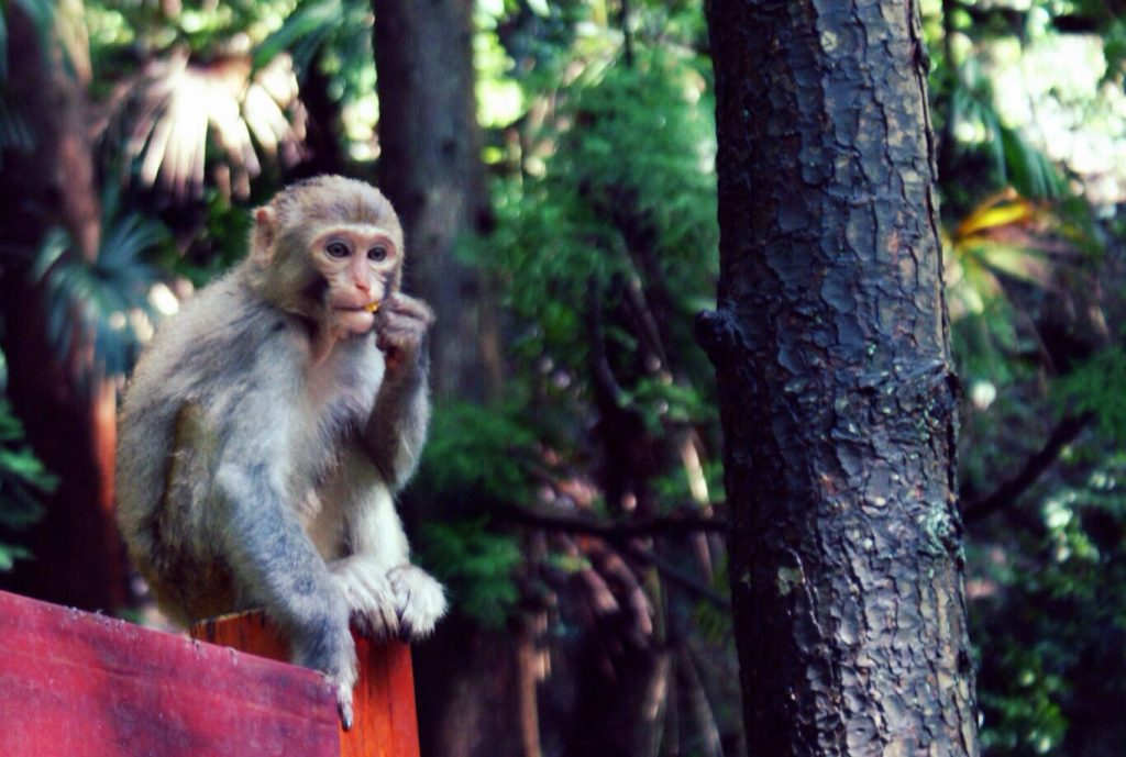 Zhangjiajie monkey national forrest park