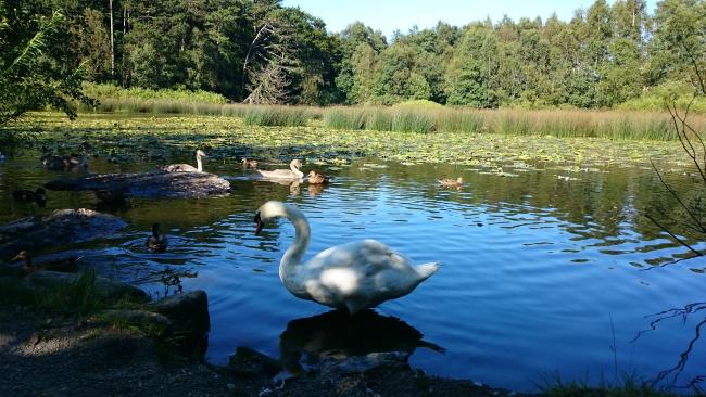 park-noorwegen