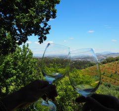 Wijn is fijn in Stellenbosch!