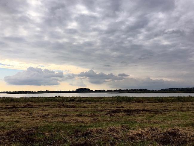 biesbosch natuur in nederland