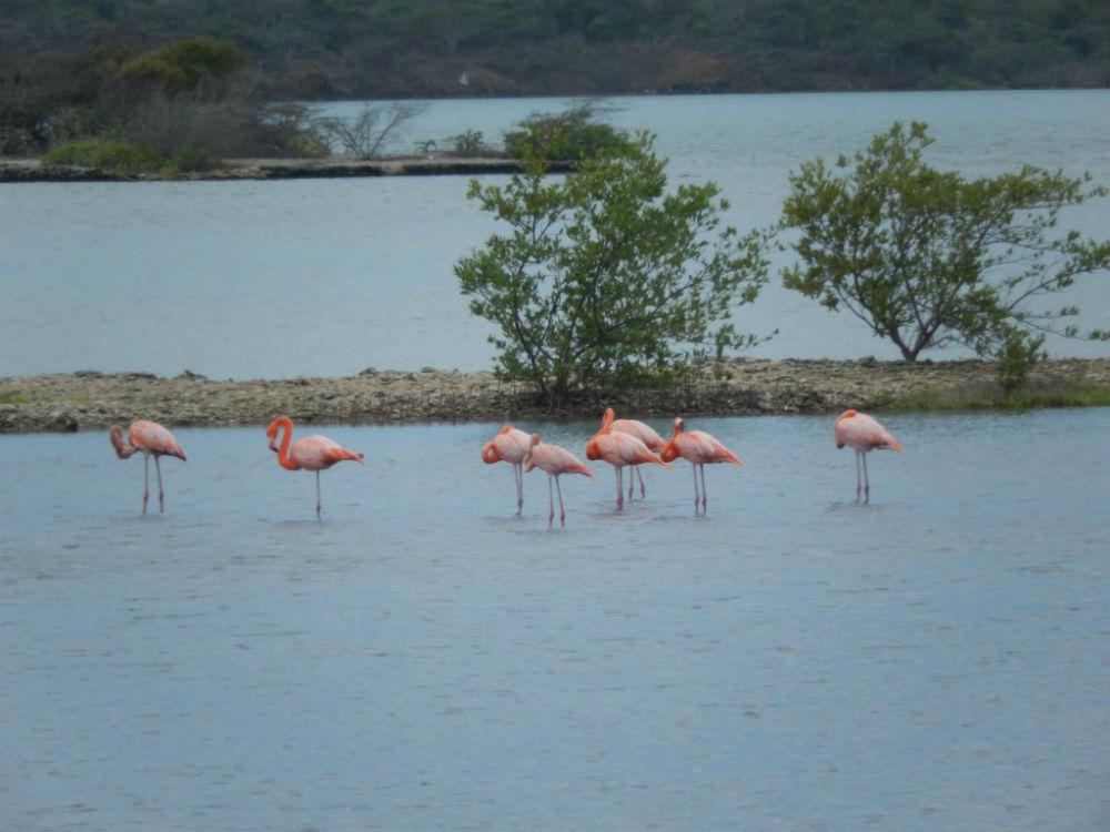 flamingos-op-de-zoutpannen-van-jan-kock