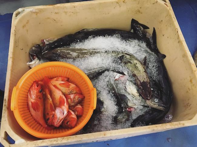vissersdorpje in ijsland