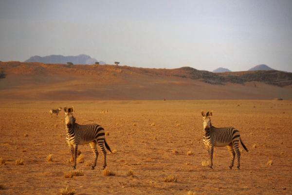 Boesman Farm Namibie