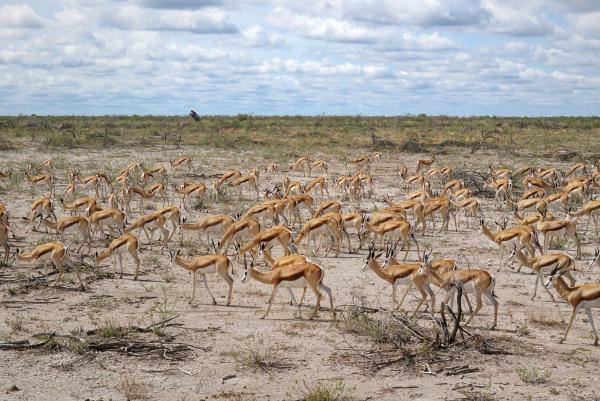 Etosha Namibie