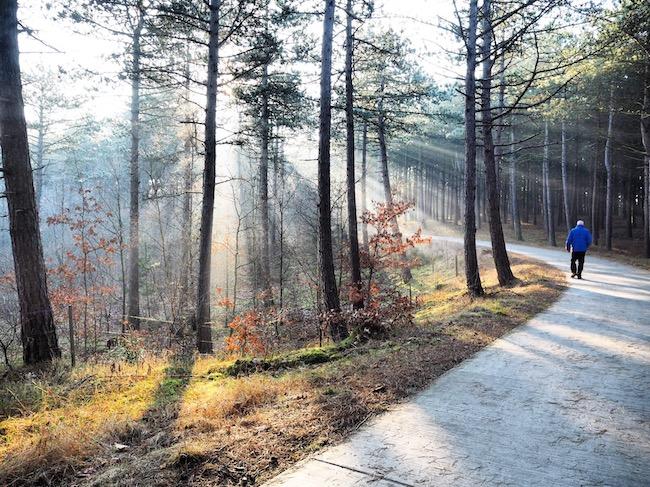 Wandelen in Nederland door de bossen van Egmond met zonnestralen door de bomen