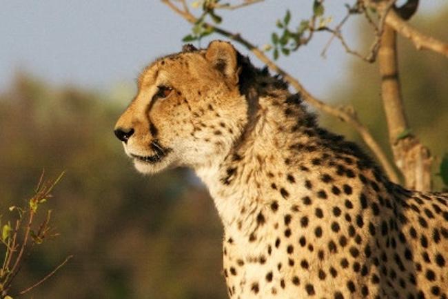 Op safari in Malawi