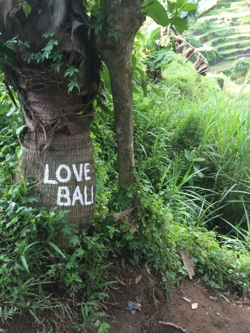Bali Like a Local