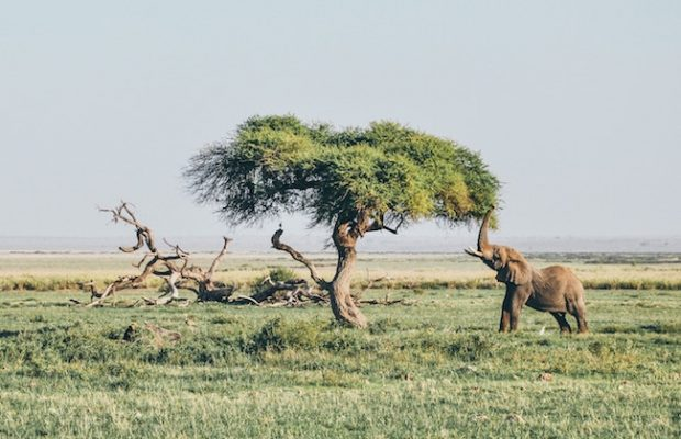 Purpose Travel: betekenisvol reizen en de wereld bedanken