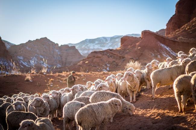 Purpose Travel: betekenisvol reizen door te werken bij lokale projecten op de juiste manier