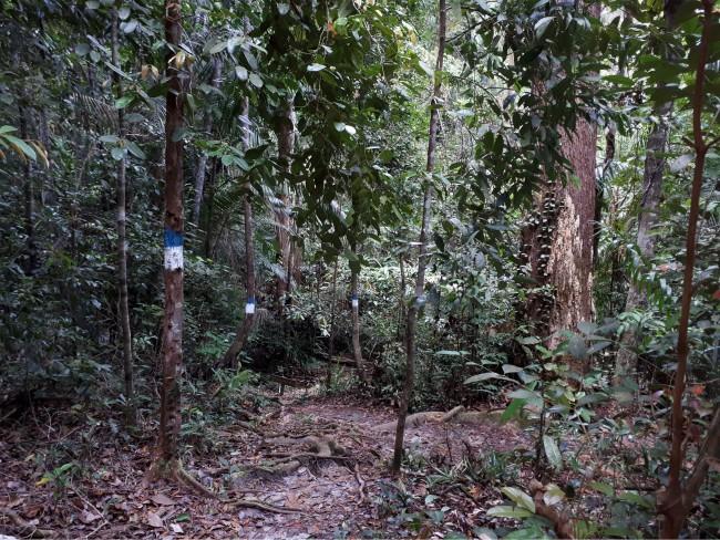 Markeringen wijzen de weg in Bako National Park.