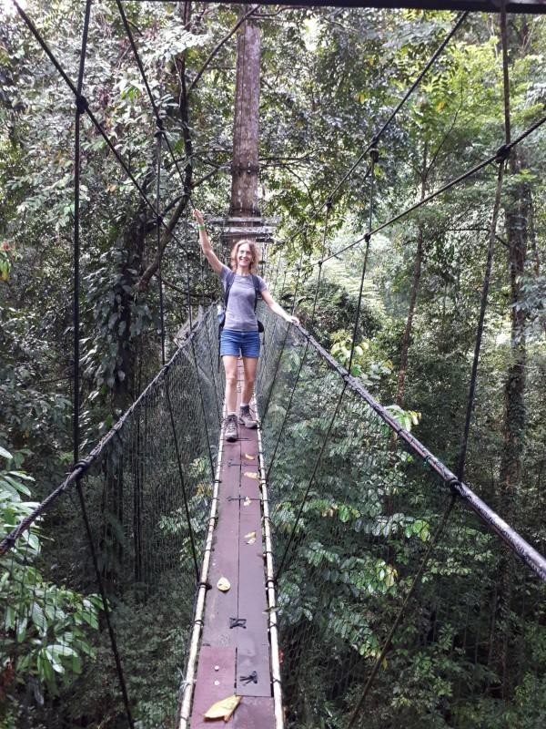 Maak een ochtendwandeling over de Mulu Canopy Skybridge