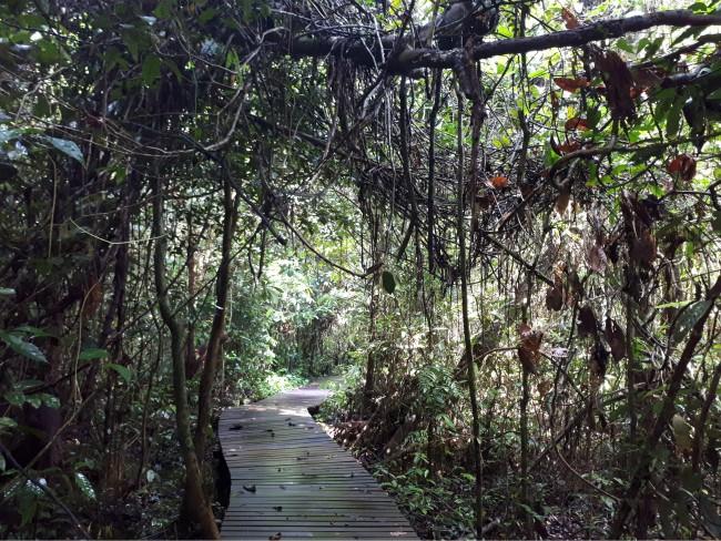Wandel over de vlonderpaden in Gunung Mulu