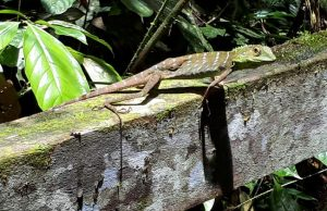Spot kameleons in Gunung Mulu National Park