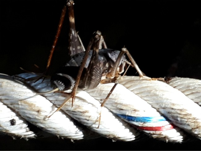 Spot allerlei grot insecten